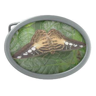 Pretty Tropical Clipper Butterfly Belt Buckle