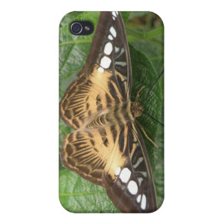 Pretty Tropical Clipper Butterfly  Cover For iPhone 4