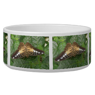Pretty Tropical Clipper Butterfly Dog Bowl