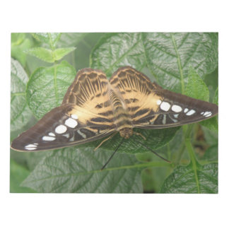 Pretty Tropical Clipper Butterfly Notepad