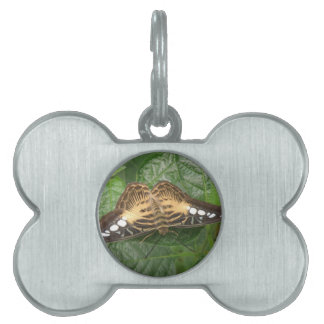 Pretty Tropical Clipper Butterfly Pet Tag