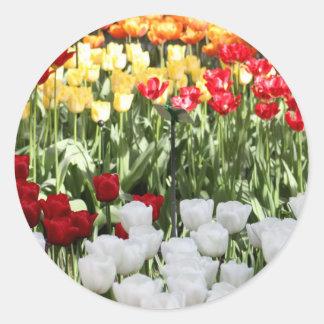 Pretty Tulips Classic Round Sticker
