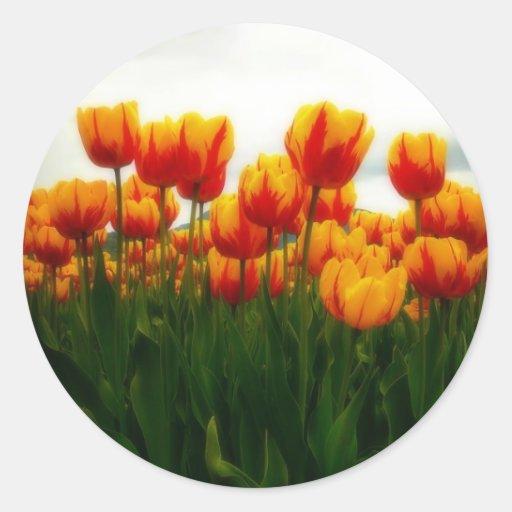 Pretty Tulips in Flower Field Round Stickers