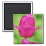 Pretty Tulips Magnet Refrigerator Magnet