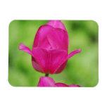 Pretty Tulips Premium Magnet Magnets