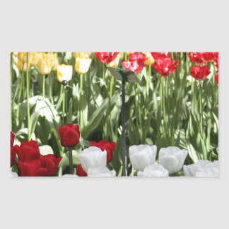 Pretty Tulips Rectangular Sticker
