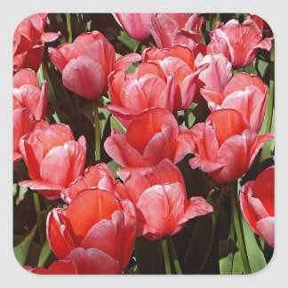 Pretty Tulips Square Sticker