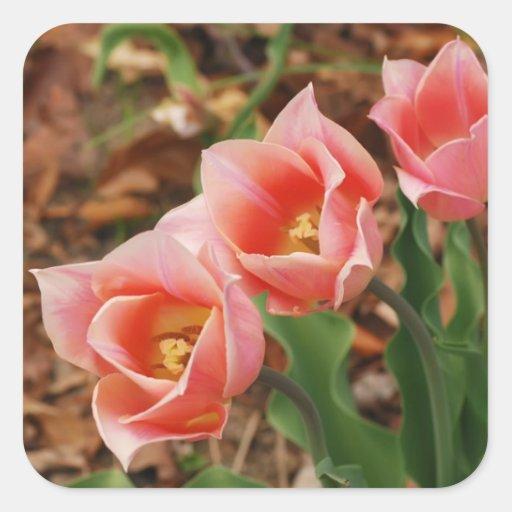 Pretty Tulips Sticker