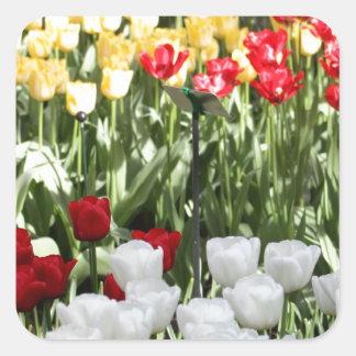 Pretty Tulips Stickers