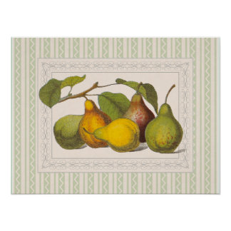 Pretty Victorian Illustratio of Pears Poster