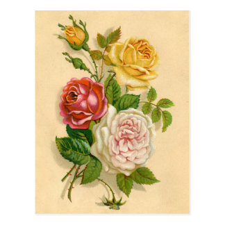 Pretty Vintage Rose Illustration Postcard