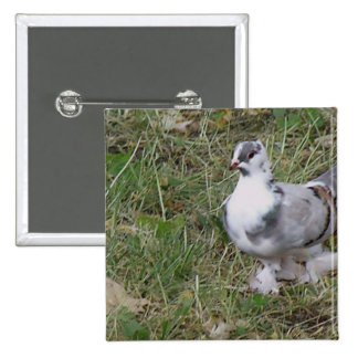Pretty White and Gray Fancy Feather Footed Pigeon 15 Cm Square Badge