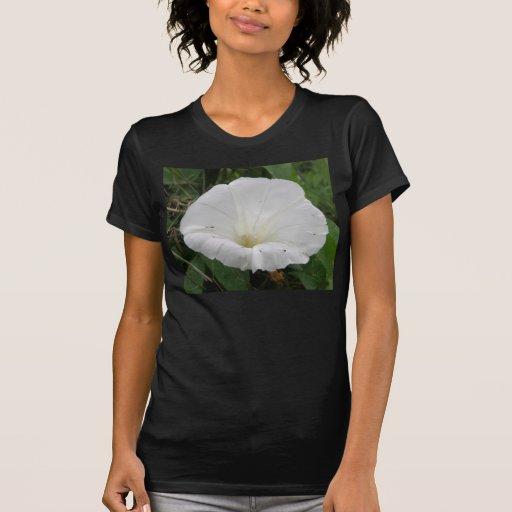 Pretty White Convolvulus Flower Ladies T Shirt