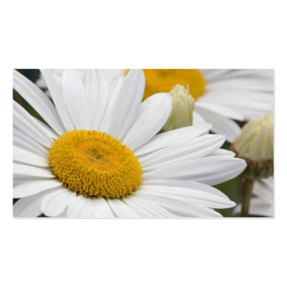 Pretty White Daisies Pack Of Standard Business Cards