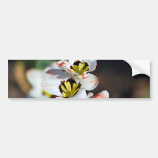 Pretty white flower faces bumper sticker