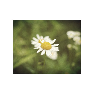 Pretty white flower in a field canvas print