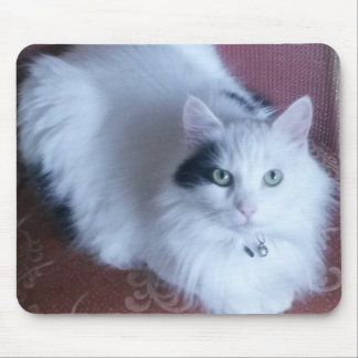 Pretty white fluffy cat with attitude mouse mat