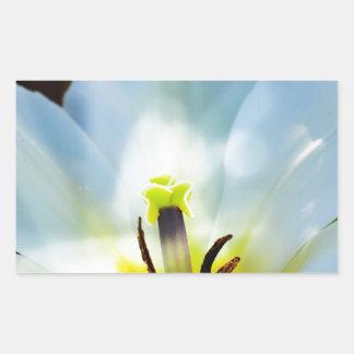 Pretty White Tulips Rectangle Sticker