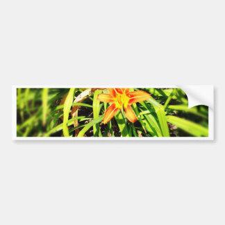 Pretty wildflower from maine bumper sticker
