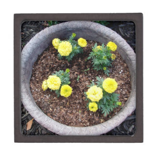 Pretty Yellow African Marigolds in a Ceramic Pot Premium Jewelry Boxes