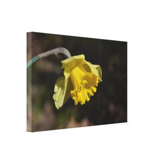 """Pretty Yellow Daffodil Flower 24.00"""" x 16.00"""" Canvas Print"""