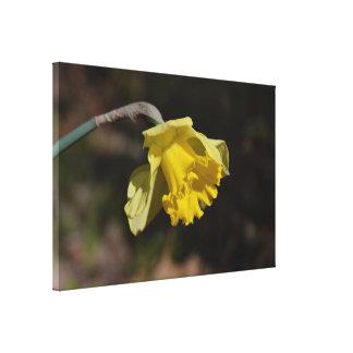 """Pretty Yellow Daffodil Flower 48.00"""" x 32.00"""" Canvas Print"""