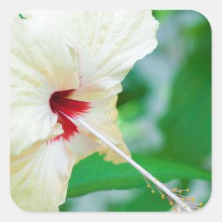 Pretty yellow hibiscus flower sticker