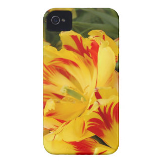 Pretty yellow & red tulip iphone case