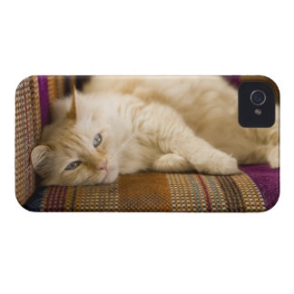 Pretty yellow tabi cat laying on couch. Case-Mate iPhone 4 case