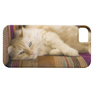 Pretty yellow tabi cat laying on couch. iPhone 5 cover