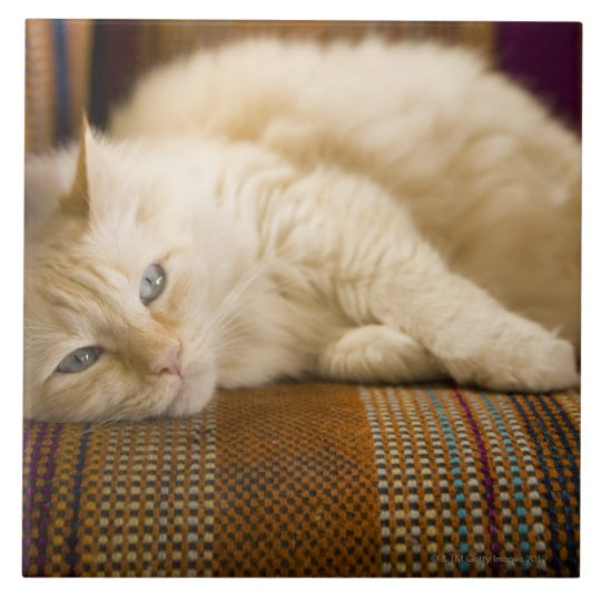 Pretty yellow tabi cat laying on couch. large square tile