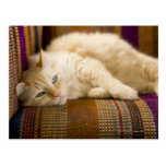 Pretty yellow tabi cat laying on couch. post cards