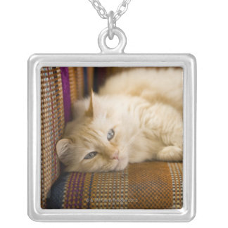 Pretty yellow tabi cat laying on couch. silver plated necklace