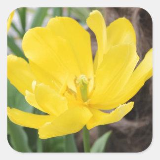 pretty yellow tulip flower floral nature garden sticker
