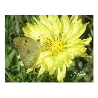 Pretty Yellow Wildflower with Butterfly Hello Postcard