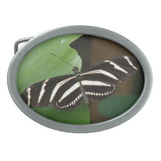 Pretty Zebra Longwing Butterfly Belt Buckle
