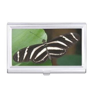 Pretty Zebra Longwing Butterfly Card holder