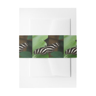 Pretty Zebra Longwing Butterfly Invite Belly Band Invitation Belly Band