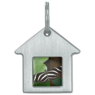 Pretty Zebra Longwing Butterfly Pet Tag