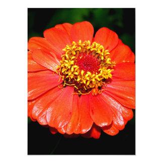 Pretty Zinnia Flower Custom Invitations