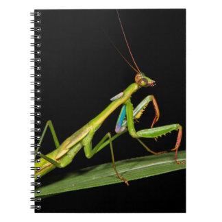 Preying mantis, Odzala, Kokoua National Park Notebook