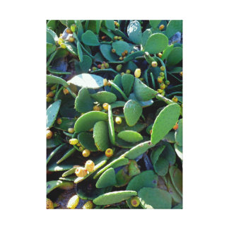 Prickley Pear Cacti Fruit Canvas Print