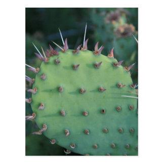 Prickley Pear Pad Postcard