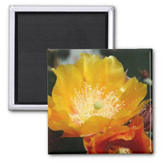 Prickly Pear Blossom Square Magnet