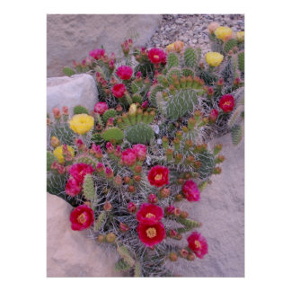 Prickly Pear Cacti Poster