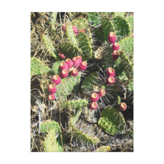 Prickly Pear Cactus Stretched Canvas Prints
