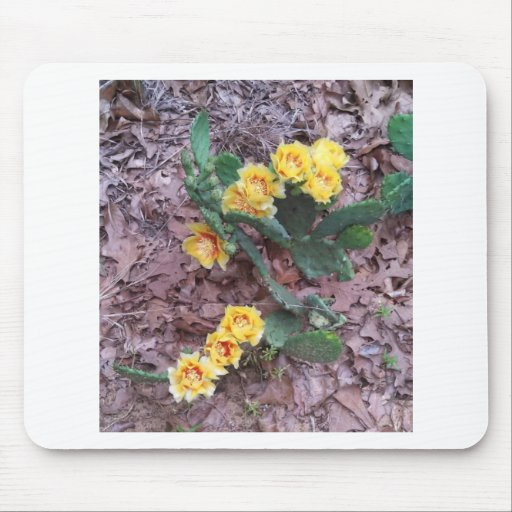 Prickly Pear Cactus Flowers Mouse Pads
