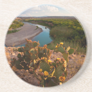 Prickly Pear Cactus (Opuntia Sp.) Coaster