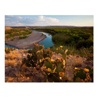 Prickly Pear Cactus (Opuntia Sp.) Postcard