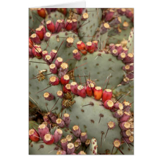 Prickly pear greeting card